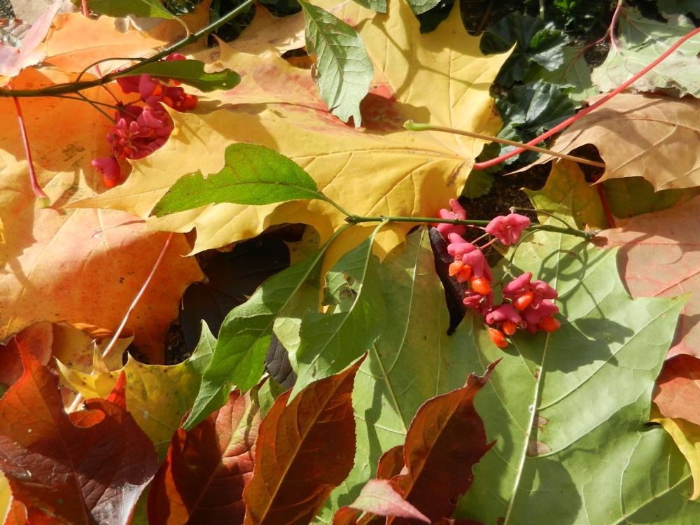 Herbstkleider, die mir gefallen